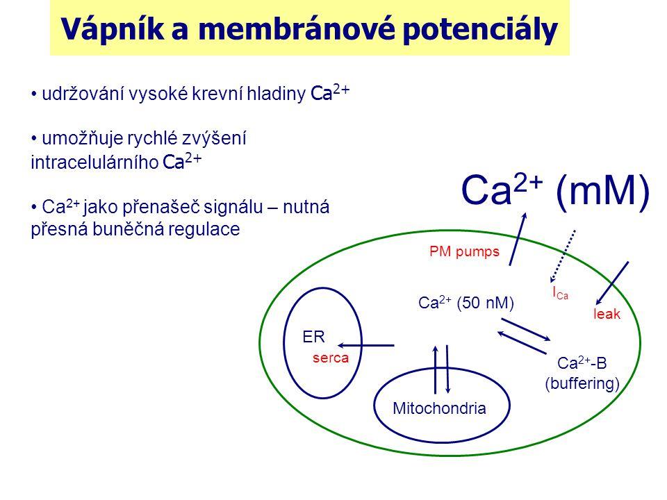 Vápník a membránové potenciály