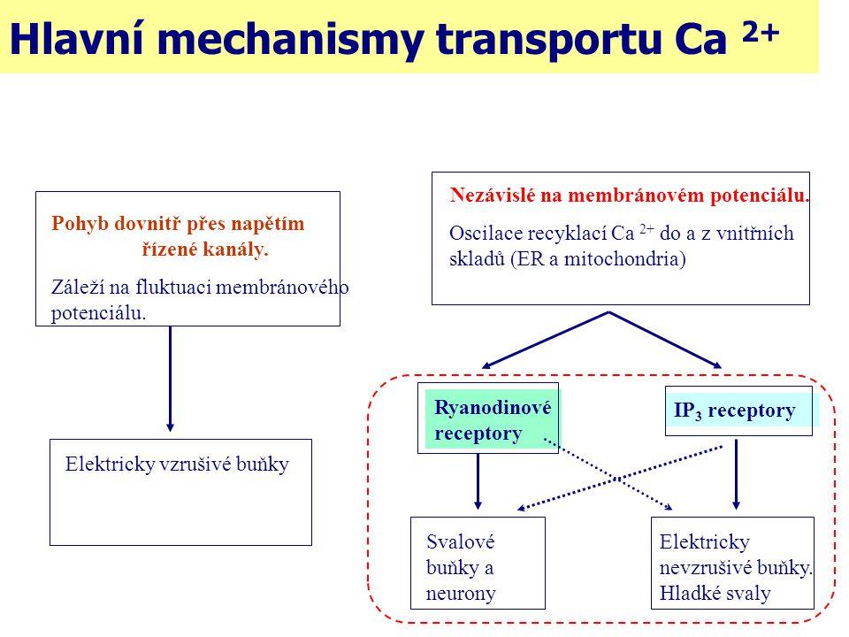 Hlavní mechanismy transportu Ca 2+