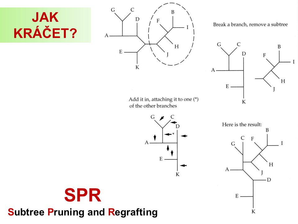 Subtree Pruning and Regrafting