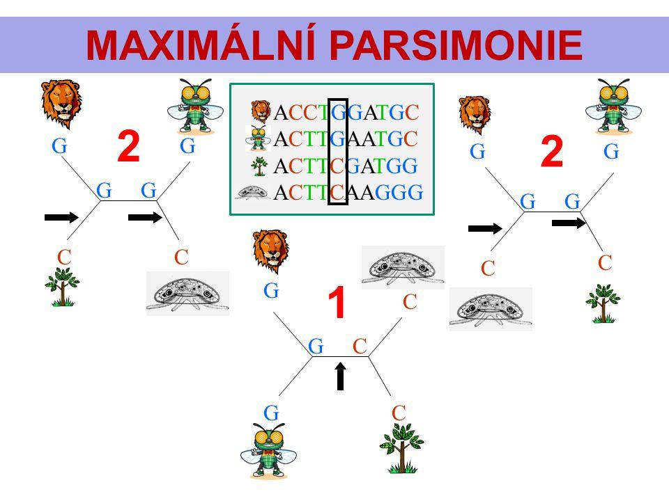 2 2 1 MAXIMÁLNÍ PARSIMONIE ACCTGGATGC ACTTGAATGC ACTTCGATGG ACTTCAAGGG