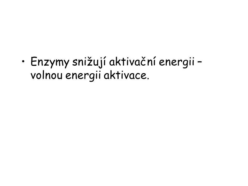 Enzymy snižují aktivační energii – volnou energii aktivace.
