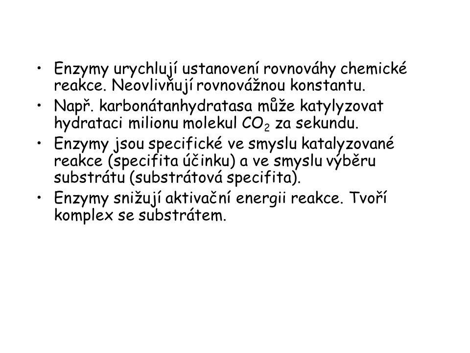 Enzymy urychlují ustanovení rovnováhy chemické reakce