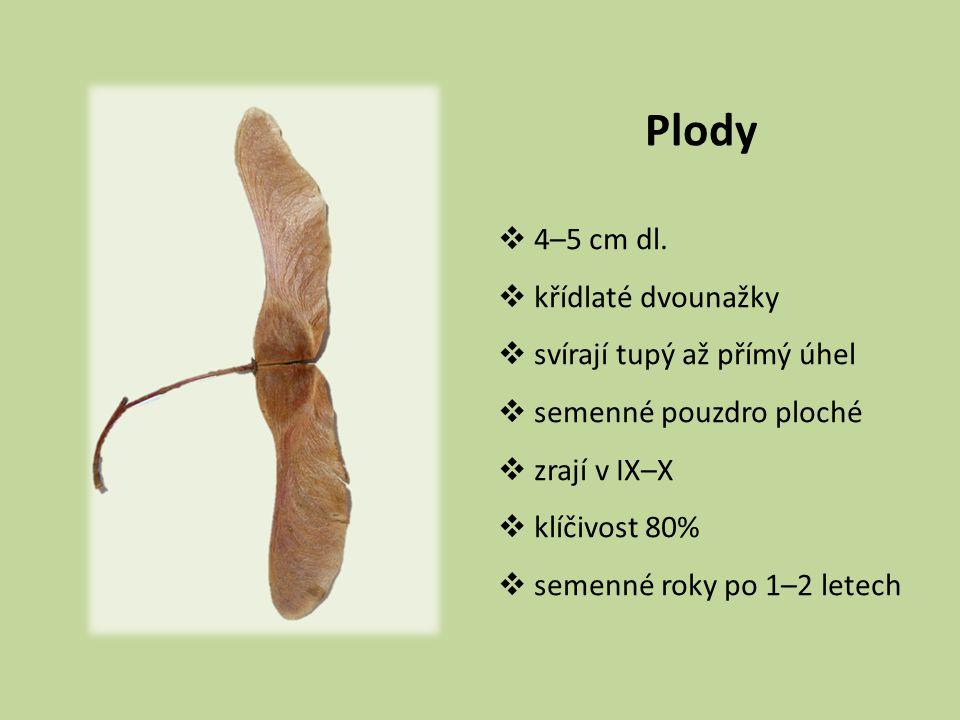 Plody 4–5 cm dl. křídlaté dvounažky svírají tupý až přímý úhel