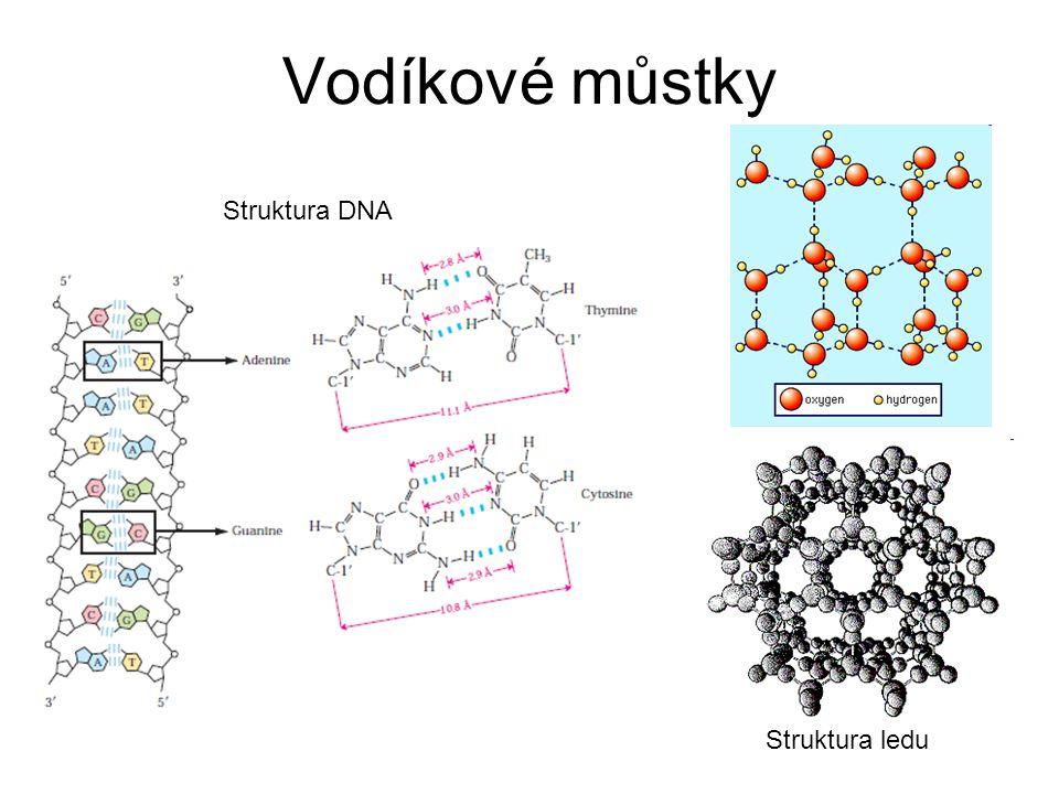 Vodíkové můstky Struktura DNA Struktura ledu