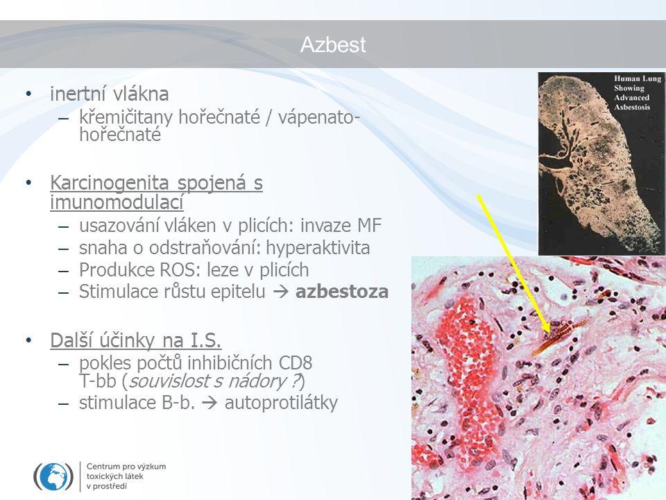 Azbest inertní vlákna Karcinogenita spojená s imunomodulací