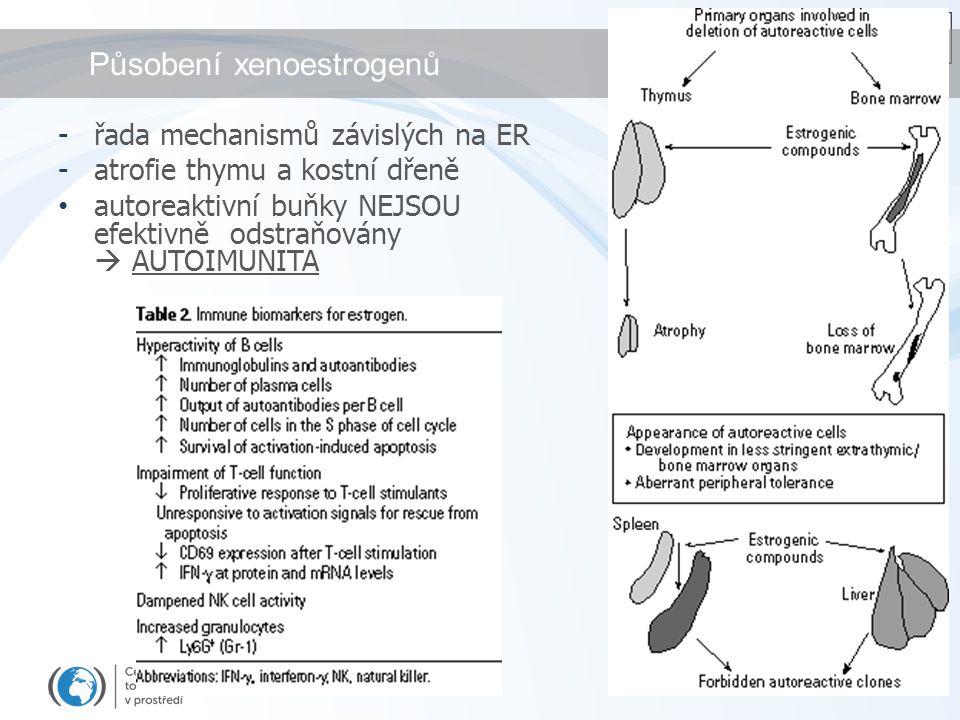 Působení xenoestrogenů
