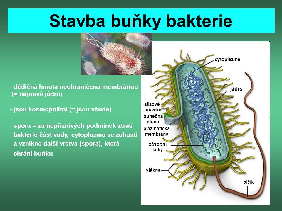 Stavba buňky bakterie dědičná hmota neohraničena membránou