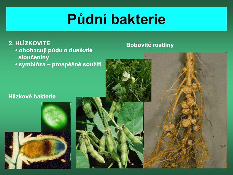 Půdní bakterie 2. HLÍZKOVITÉ Bobovité rostliny