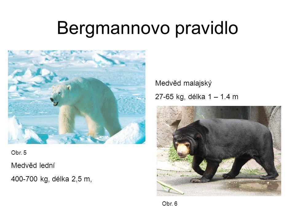 Bergmannovo pravidlo Medvěd malajský 27-65 kg, délka 1 – 1.4 m