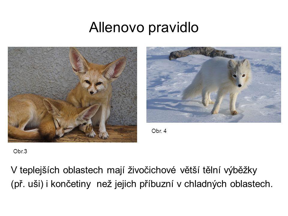 Allenovo pravidlo Obr. 4. Obr.3. V teplejších oblastech mají živočichové větší tělní výběžky.