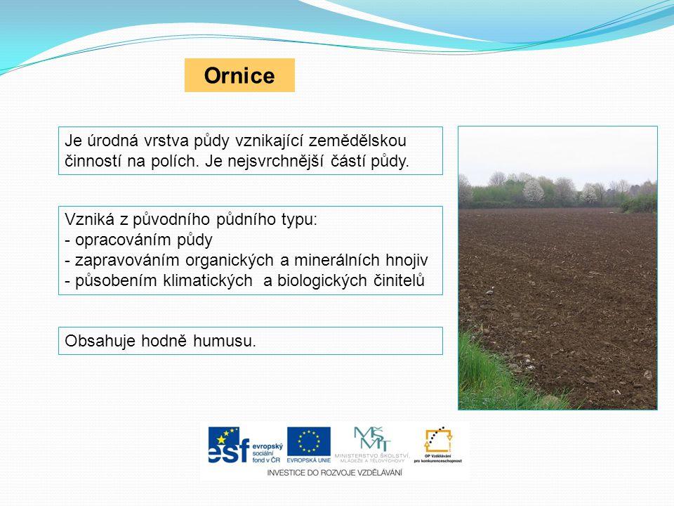 Ornice Je úrodná vrstva půdy vznikající zemědělskou