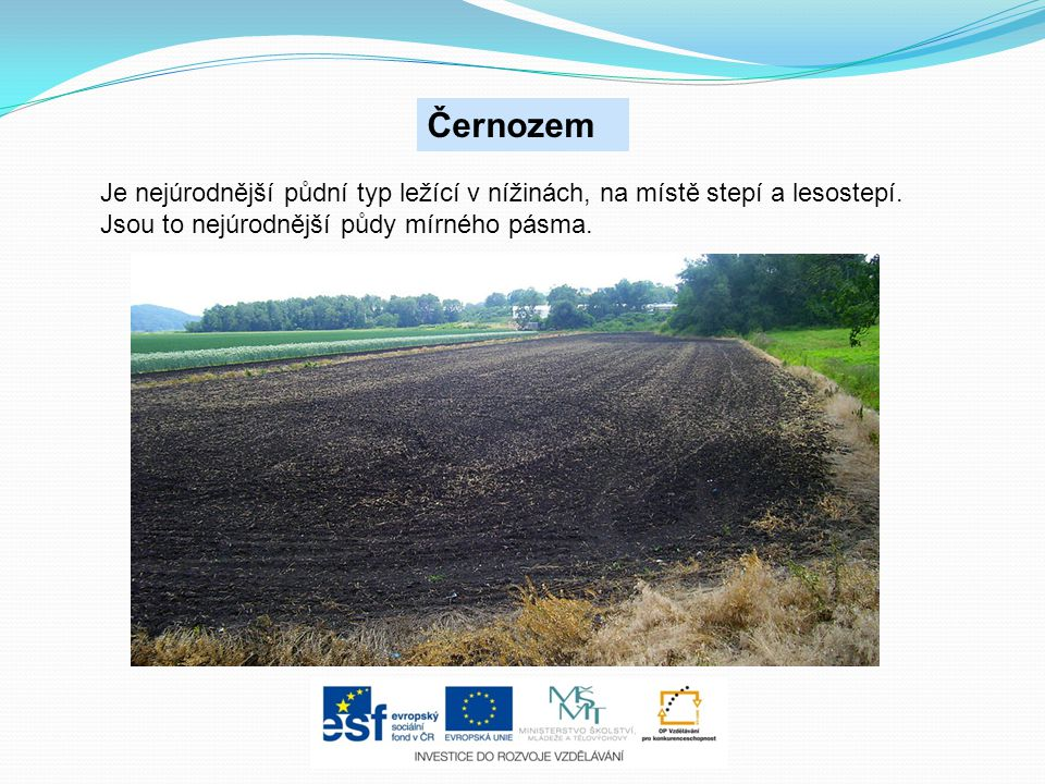 Černozem Je nejúrodnější půdní typ ležící v nížinách, na místě stepí a lesostepí.