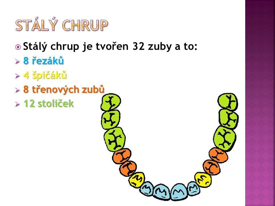 Stálý chrup Stálý chrup je tvořen 32 zuby a to: 8 řezáků 4 špičáků