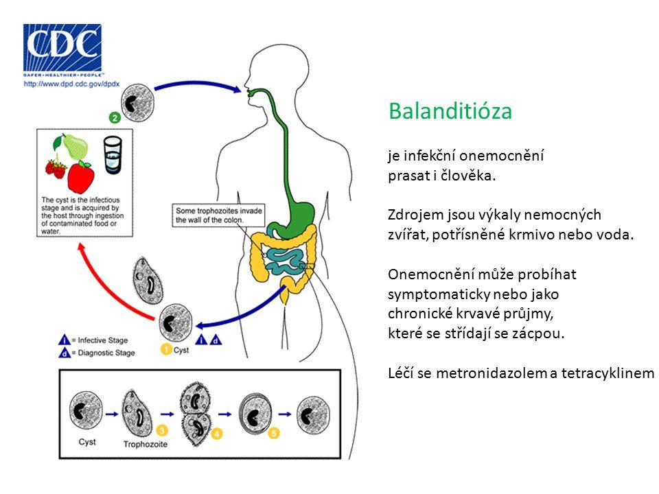 Balanditióza je infekční onemocnění prasat i člověka.