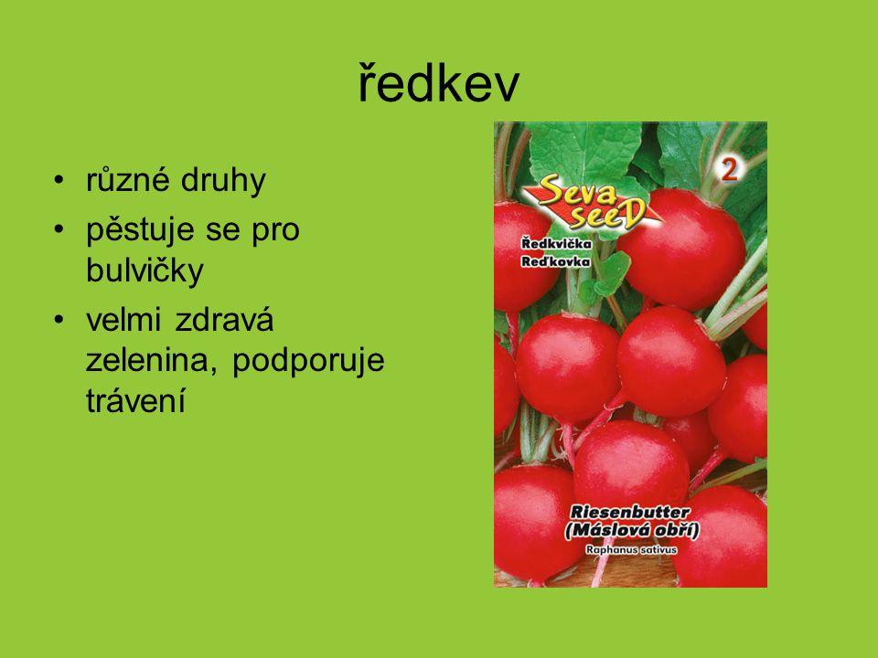 ředkev různé druhy pěstuje se pro bulvičky