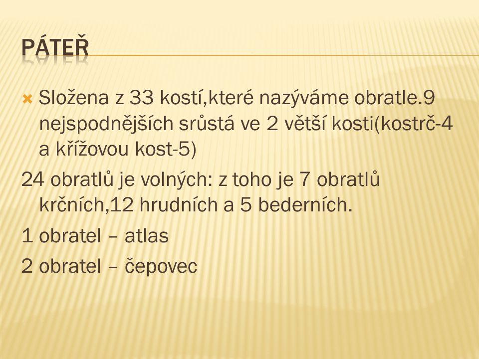Páteř Složena z 33 kostí,které nazýváme obratle.9 nejspodnějších srůstá ve 2 větší kosti(kostrč-4 a křížovou kost-5)