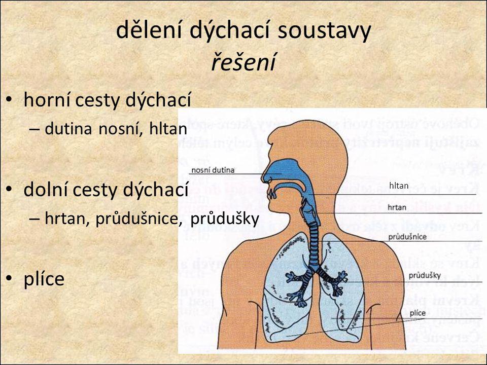 dělení dýchací soustavy řešení