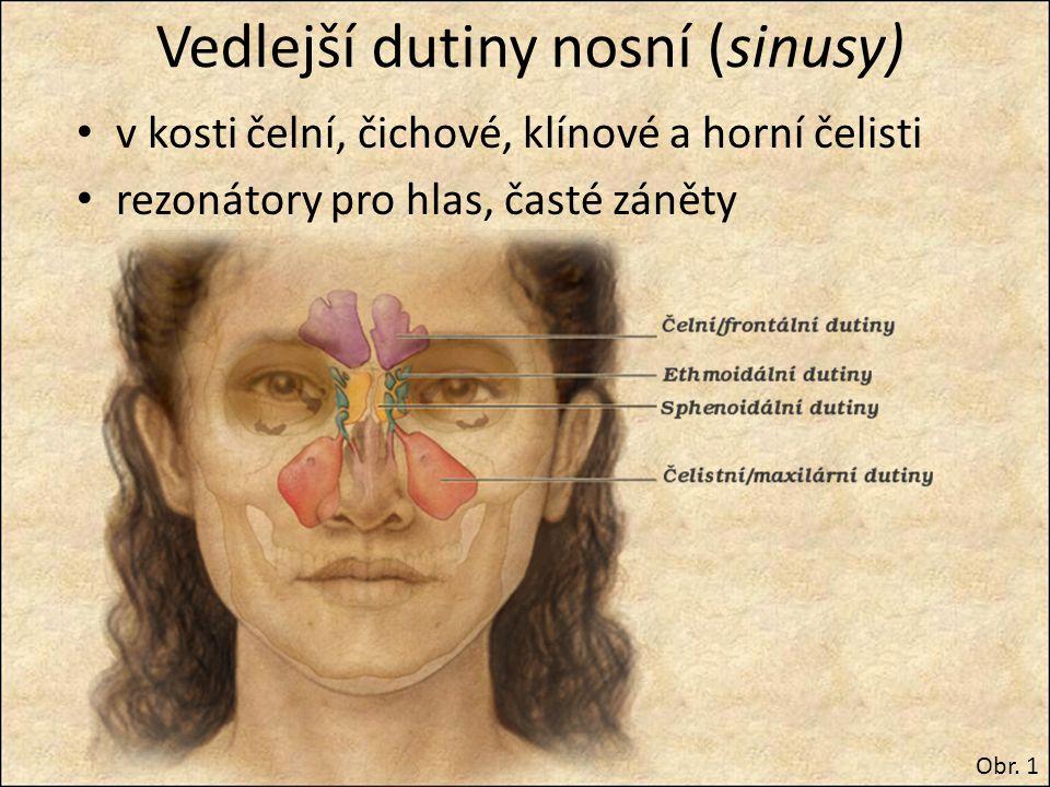 Vedlejší dutiny nosní (sinusy)