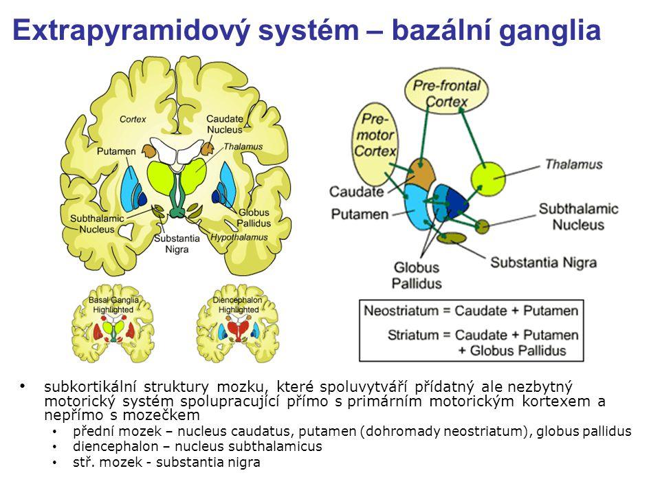 Extrapyramidový systém – bazální ganglia