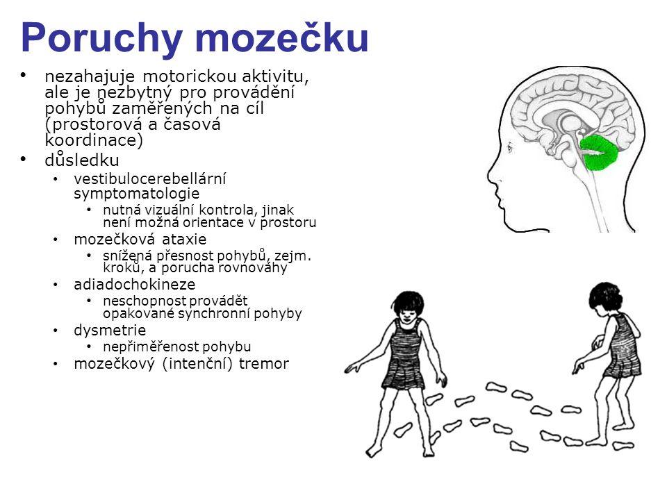 Poruchy mozečku nezahajuje motorickou aktivitu, ale je nezbytný pro provádění pohybů zaměřených na cíl (prostorová a časová koordinace)