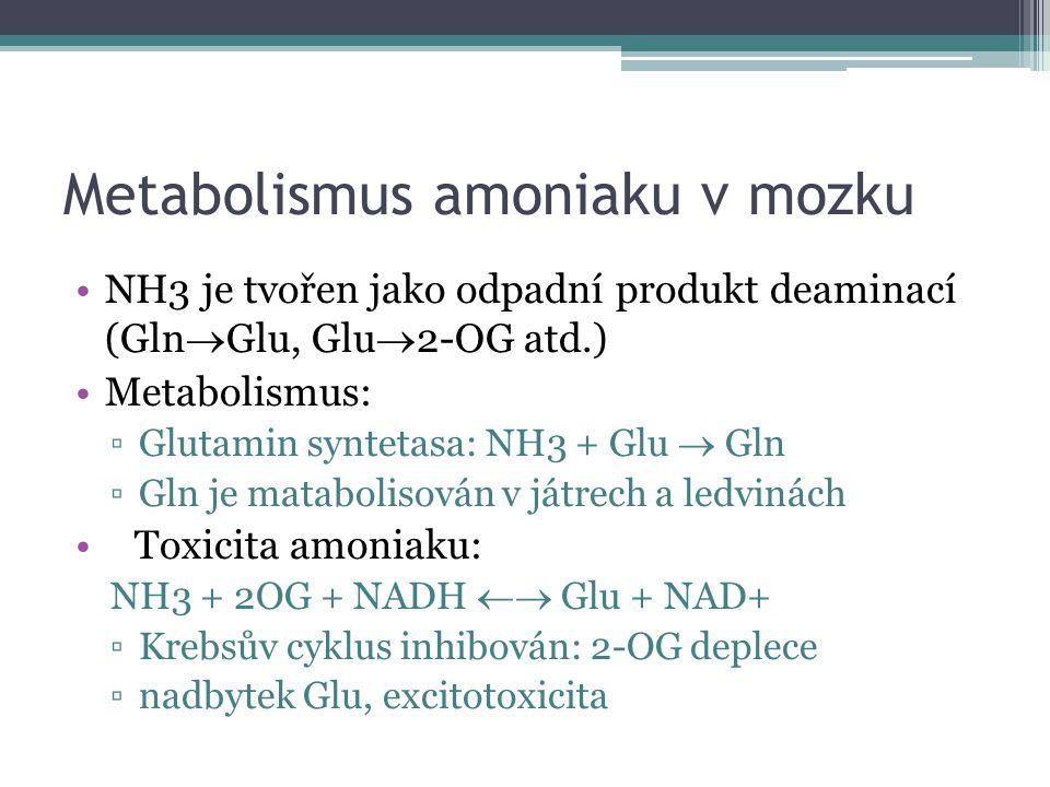 Metabolismus amoniaku v mozku