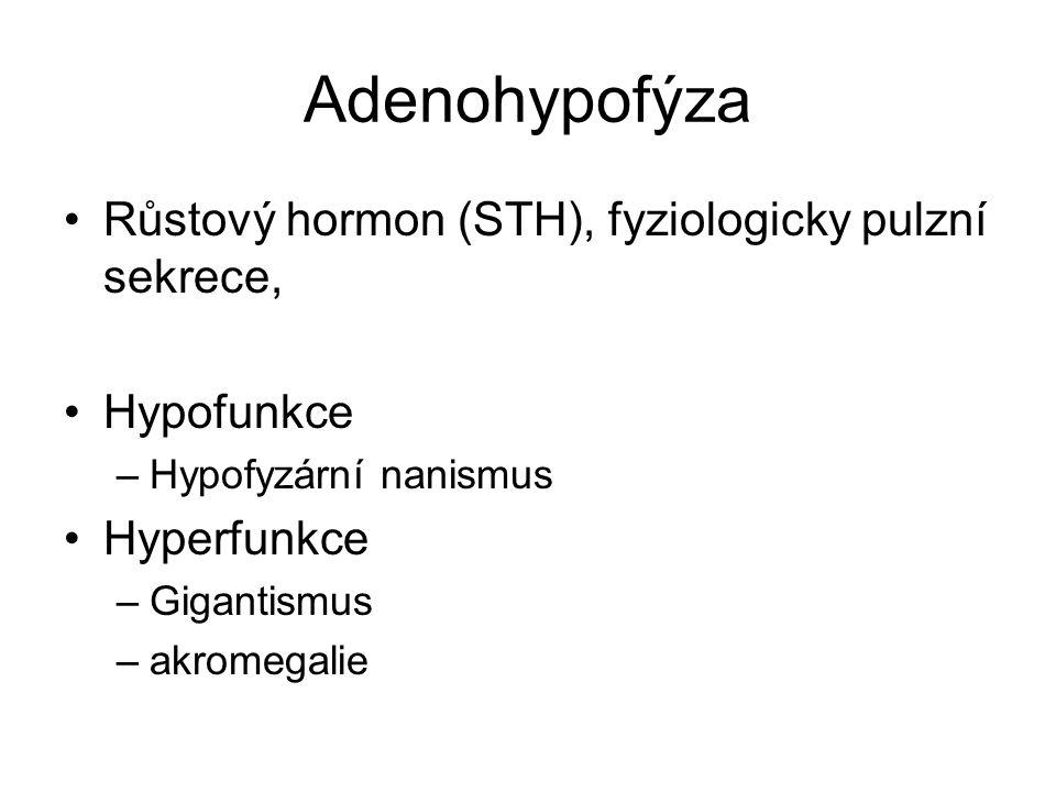 Adenohypofýza Růstový hormon (STH), fyziologicky pulzní sekrece,