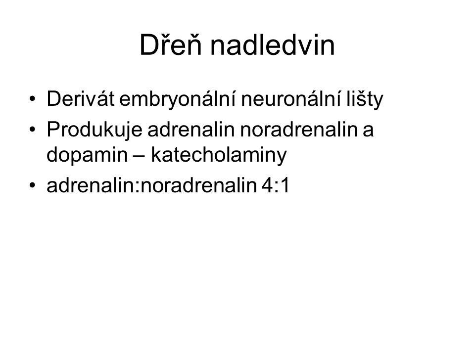 Dřeň nadledvin Derivát embryonální neuronální lišty