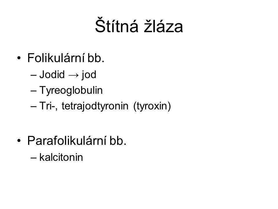 Štítná žláza Folikulární bb. Parafolikulární bb. Jodid → jod
