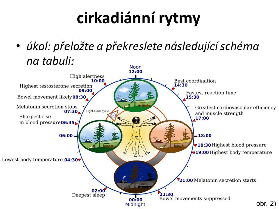 cirkadiánní rytmy úkol: přeložte a překreslete následující schéma na tabuli: obr. 2)