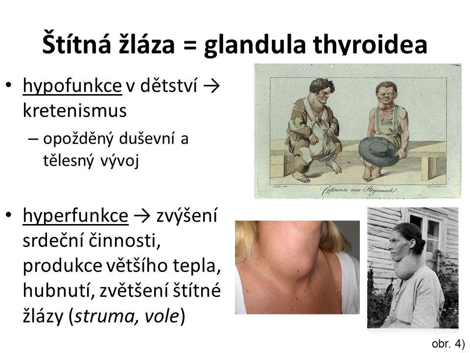 Štítná žláza = glandula thyroidea
