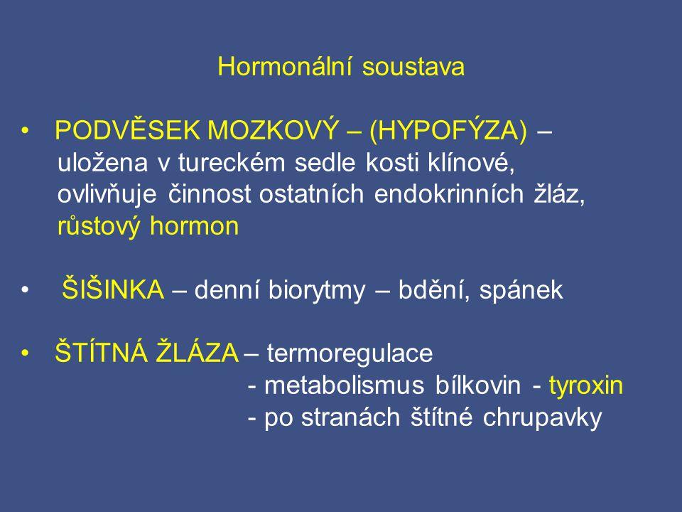 Hormonální soustava PODVĚSEK MOZKOVÝ – (HYPOFÝZA) – uložena v tureckém sedle kosti klínové, ovlivňuje činnost ostatních endokrinních žláz,