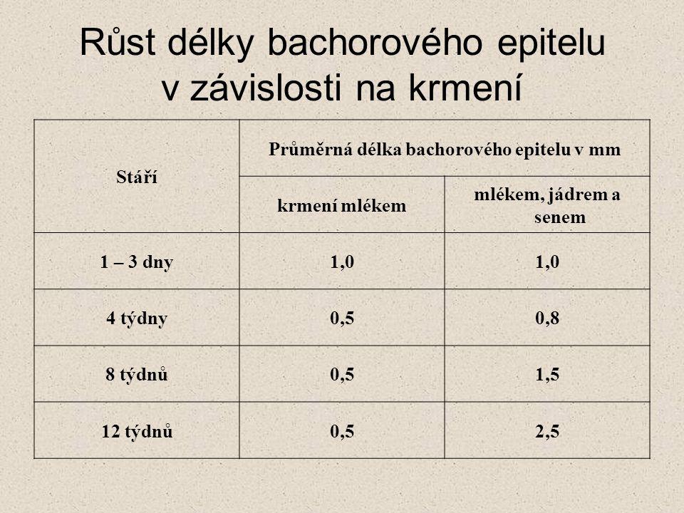 Růst délky bachorového epitelu v závislosti na krmení