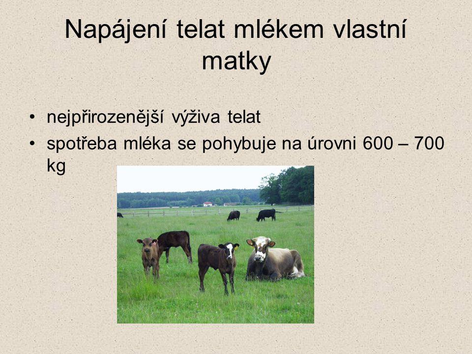 Napájení telat mlékem vlastní matky