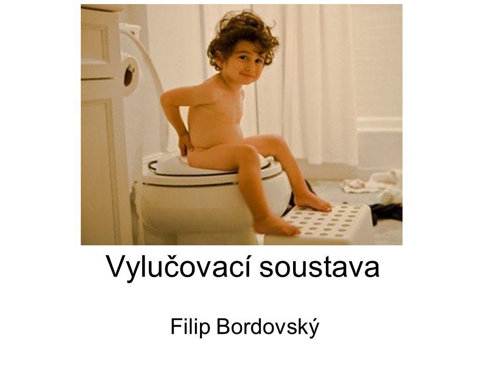 Vylučovací soustava Filip Bordovský