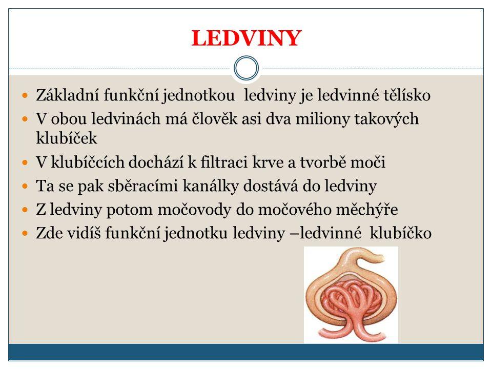 LEDVINY Základní funkční jednotkou ledviny je ledvinné tělísko