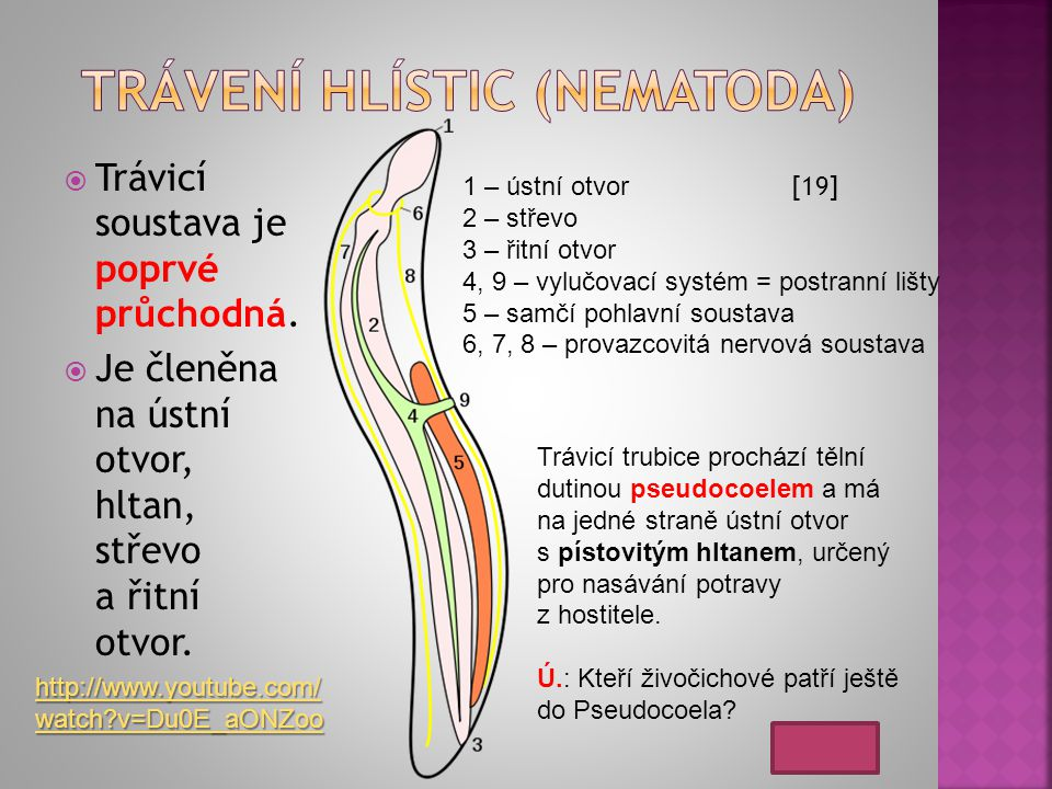 Trávení hlístic (nematoda)