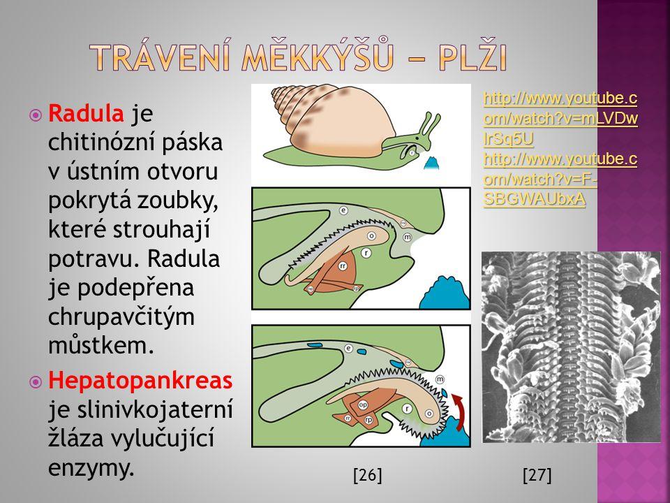 Trávení měkkýšů − plži http://www.youtube.com/watch v=mLVDwlrSq5U. http://www.youtube.com/watch v=F-SBGWAUbxA.
