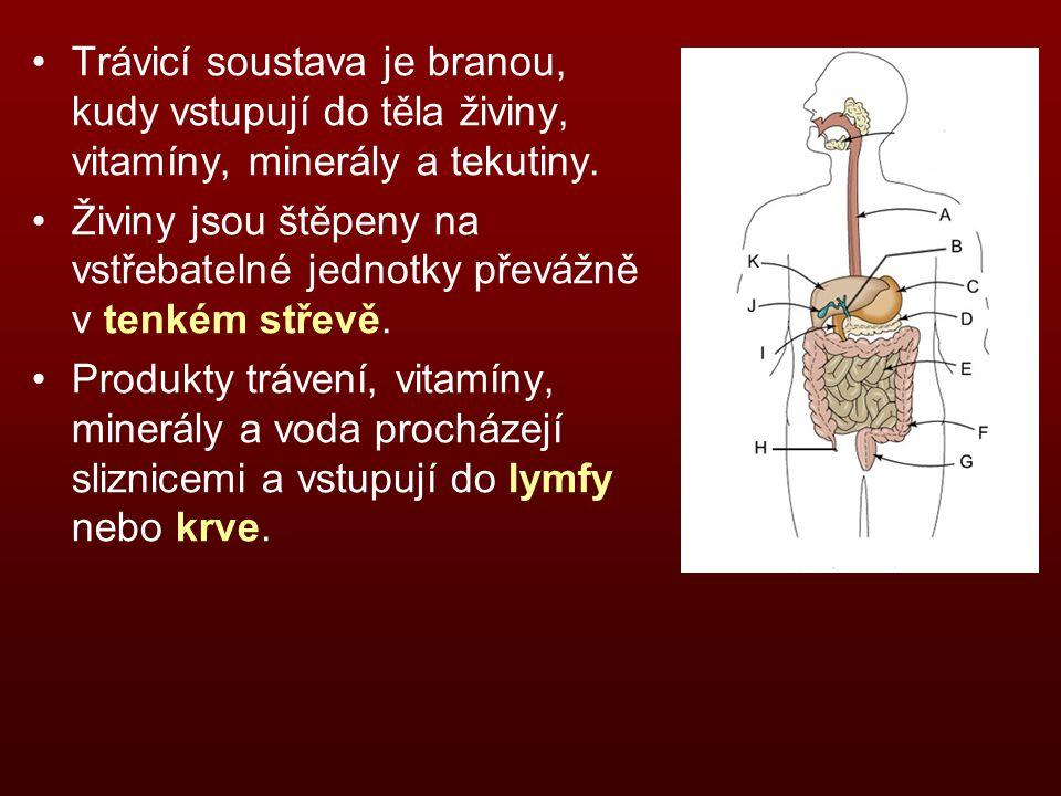 Trávicí soustava je branou, kudy vstupují do těla živiny, vitamíny, minerály a tekutiny.