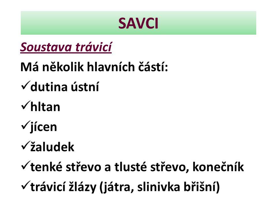 SAVCI Soustava trávicí Má několik hlavních částí: dutina ústní hltan