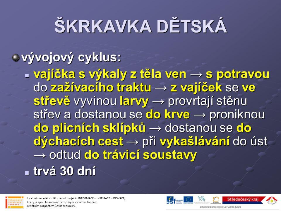 ŠKRKAVKA DĚTSKÁ vývojový cyklus: