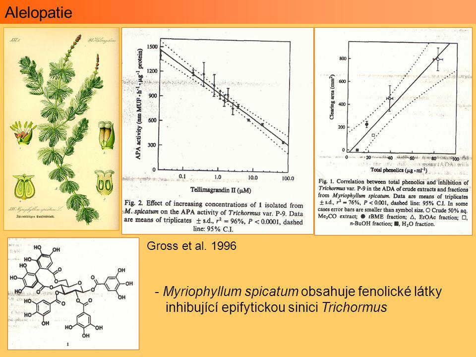 Alelopatie Myriophyllum spicatum obsahuje fenolické látky