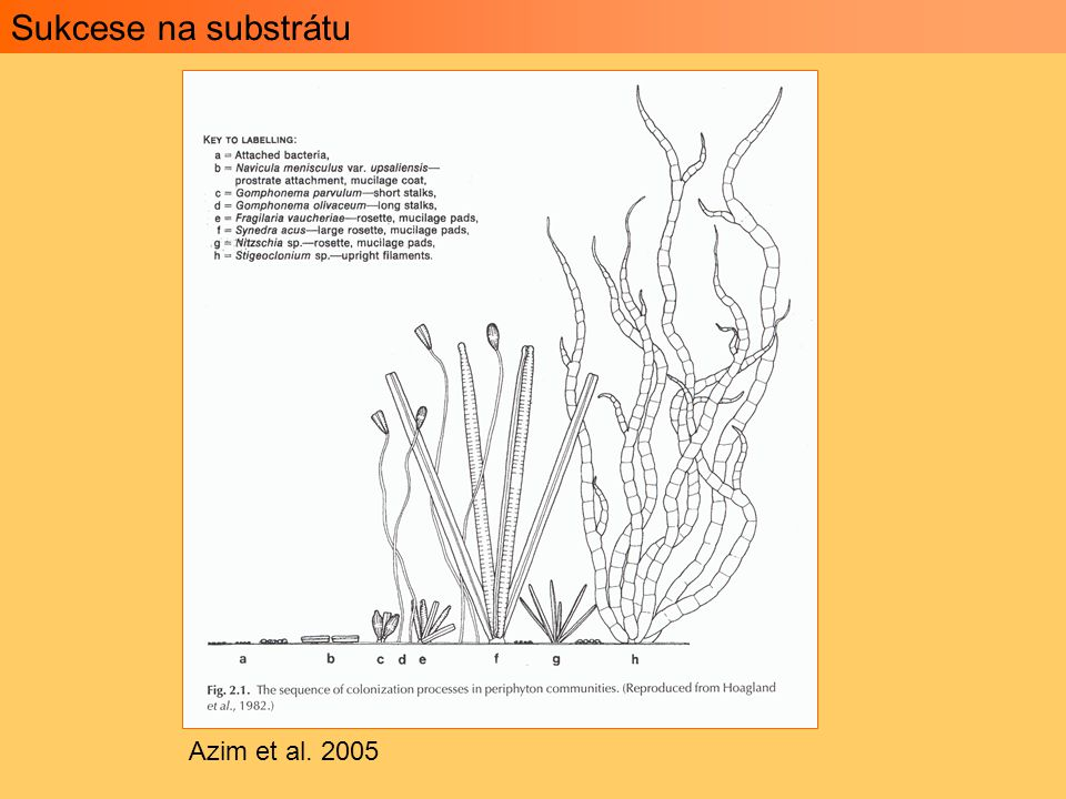 Sukcese na substrátu Azim et al. 2005