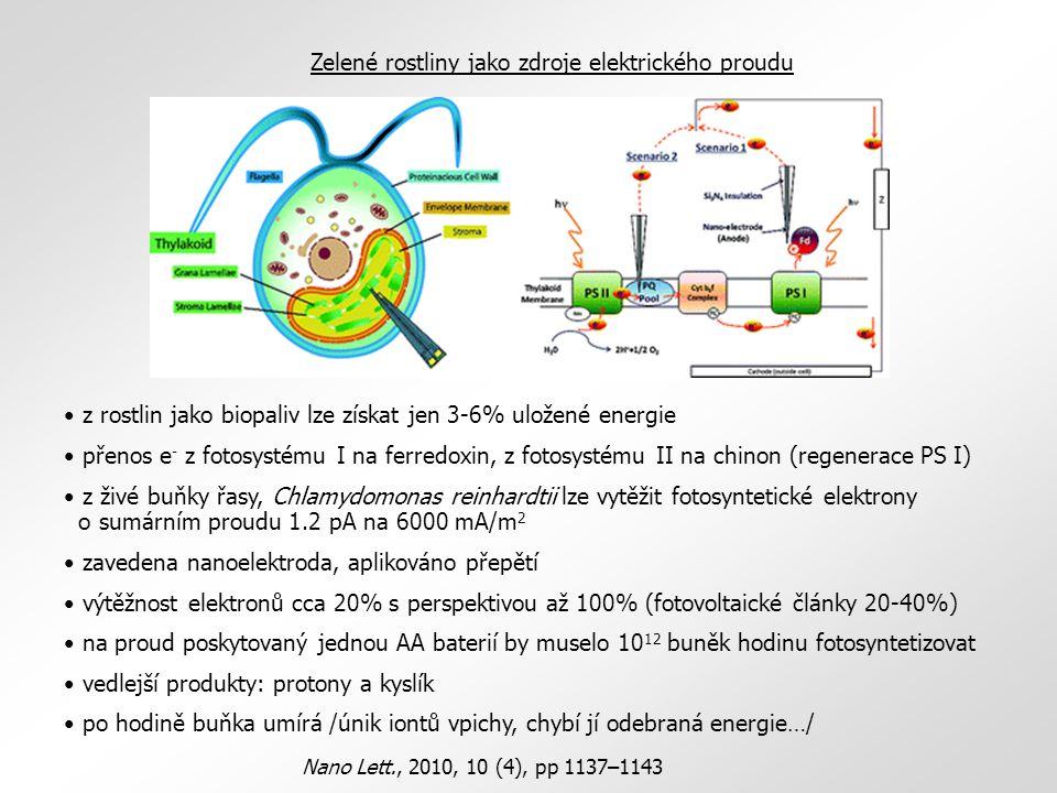 Zelené rostliny jako zdroje elektrického proudu