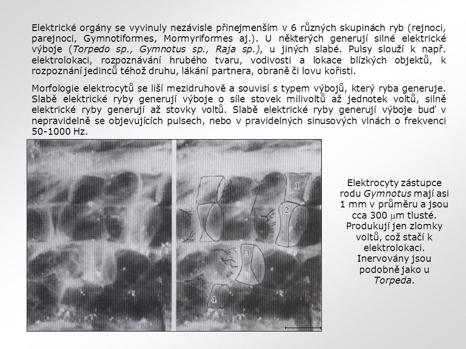 Elektrické orgány se vyvinuly nezávisle přinejmenším v 6 různých skupinách ryb (rejnoci, parejnoci, Gymnotiformes, Mormyriformes aj.). U některých generují silné elektrické výboje (Torpedo sp., Gymnotus sp., Raja sp.), u jiných slabé. Pulsy slouží k např. elektrolokaci, rozpoznávání hrubého tvaru, vodivosti a lokace blízkých objektů, k rozpoznání jedinců téhož druhu, lákání partnera, obraně či lovu kořisti.