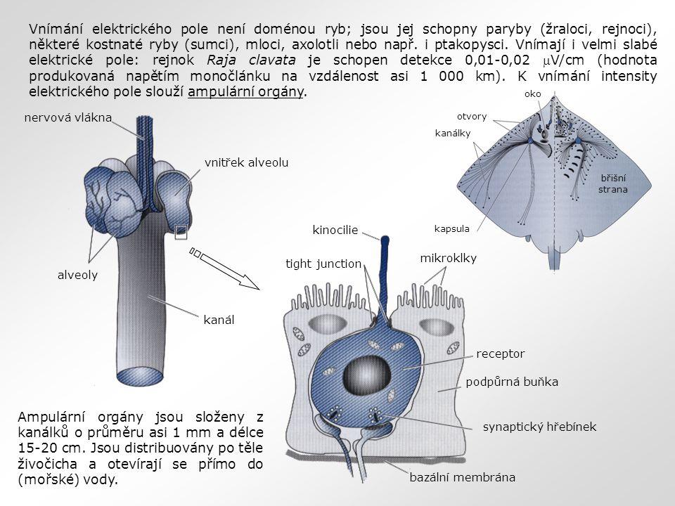 Vnímání elektrického pole není doménou ryb; jsou jej schopny paryby (žraloci, rejnoci), některé kostnaté ryby (sumci), mloci, axolotli nebo např. i ptakopysci. Vnímají i velmi slabé elektrické pole: rejnok Raja clavata je schopen detekce 0,01-0,02 V/cm (hodnota produkovaná napětím monočlánku na vzdálenost asi 1 000 km). K vnímání intensity elektrického pole slouží ampulární orgány.
