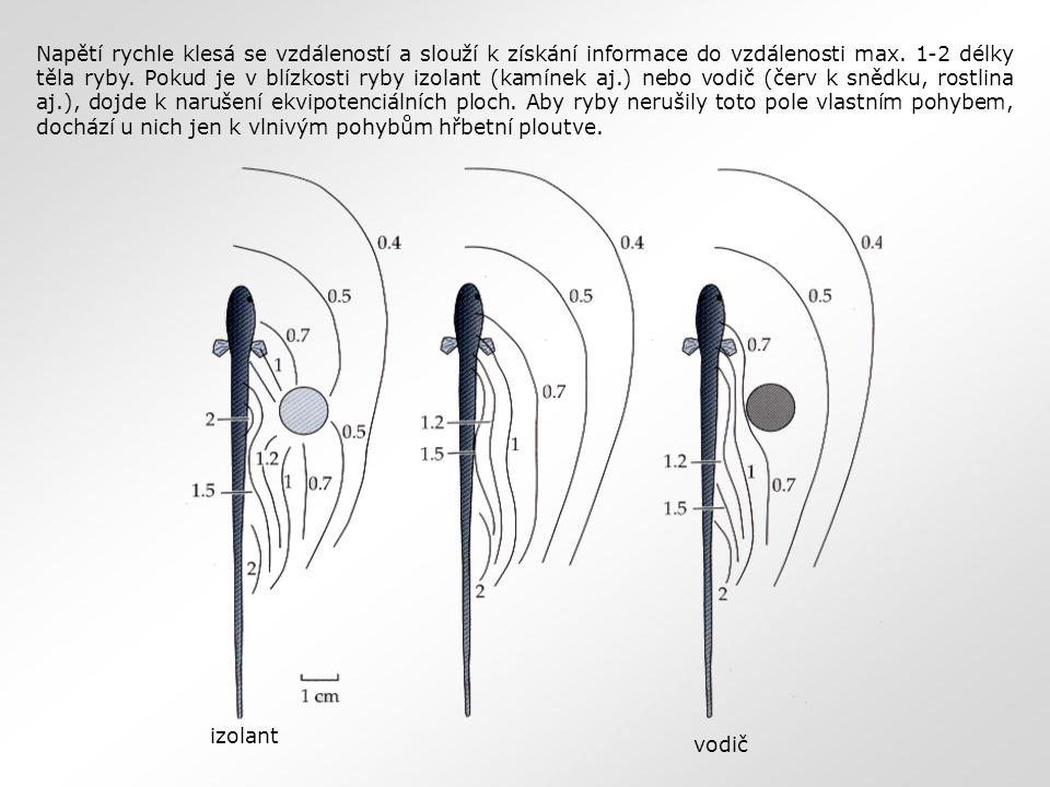 Napětí rychle klesá se vzdáleností a slouží k získání informace do vzdálenosti max. 1-2 délky těla ryby. Pokud je v blízkosti ryby izolant (kamínek aj.) nebo vodič (červ k snědku, rostlina aj.), dojde k narušení ekvipotenciálních ploch. Aby ryby nerušily toto pole vlastním pohybem, dochází u nich jen k vlnivým pohybům hřbetní ploutve.