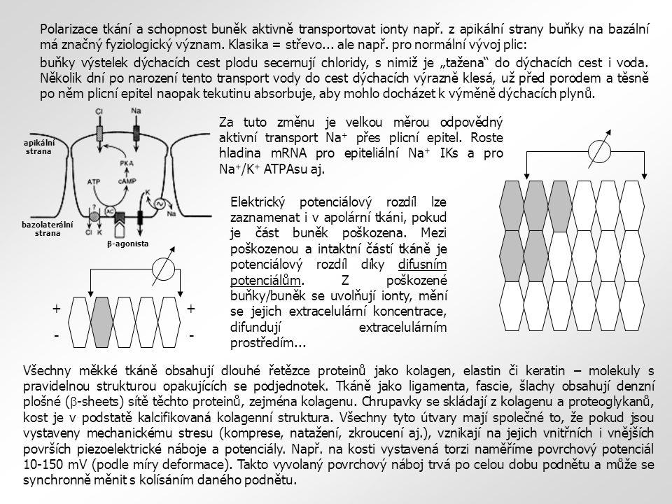Polarizace tkání a schopnost buněk aktivně transportovat ionty např