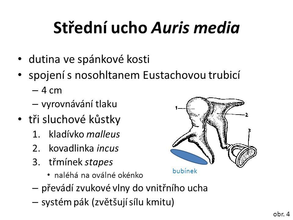 Střední ucho Auris media