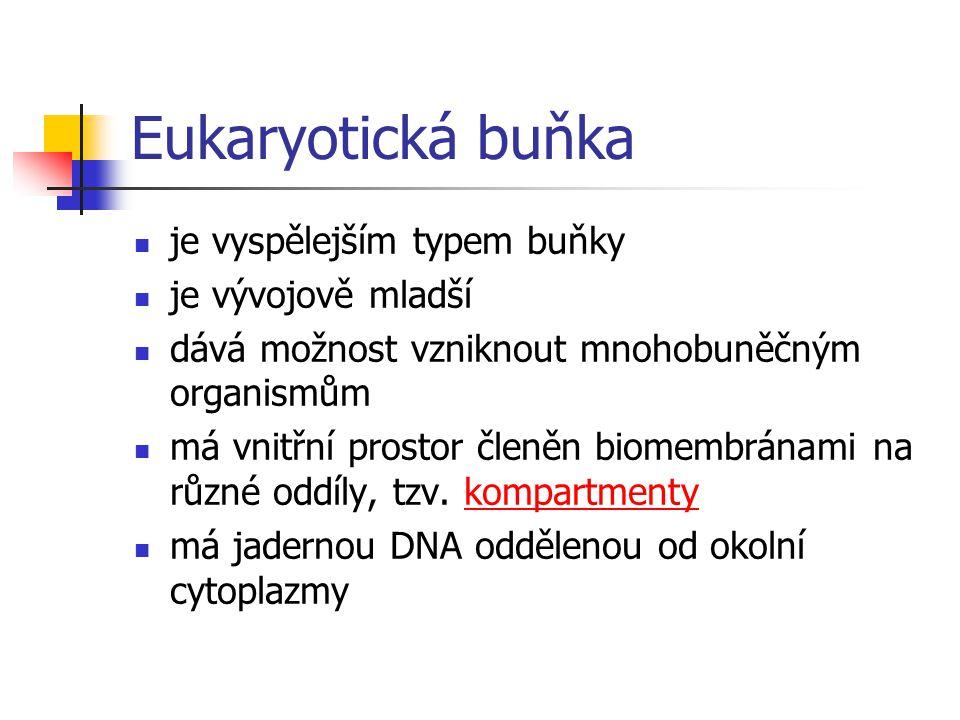 Eukaryotická buňka je vyspělejším typem buňky je vývojově mladší