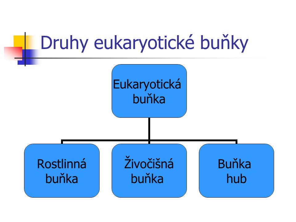 Druhy eukaryotické buňky